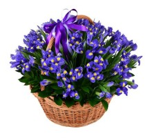 101 iris in a basket