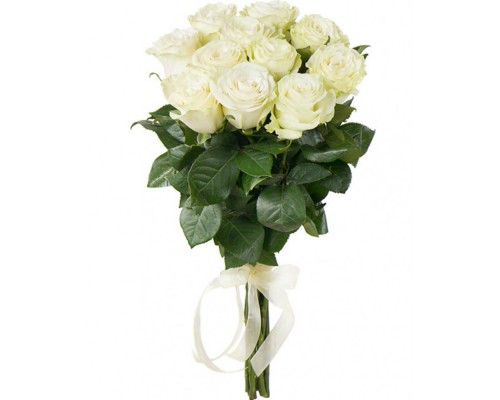 11 white Holland roses 70 cm
