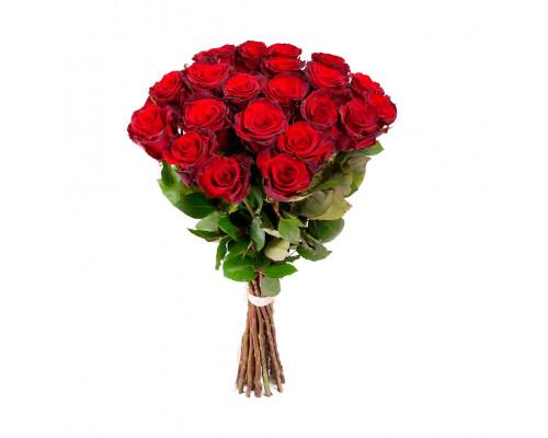 21 Holland rose