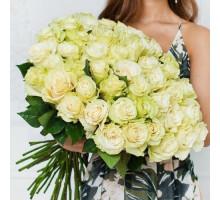 35 white Dutch roses