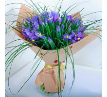 35 irises with herbs per pack
