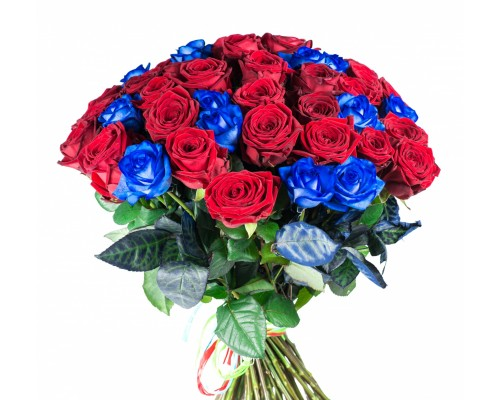 51  red and blue rose