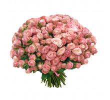 51 bush roses