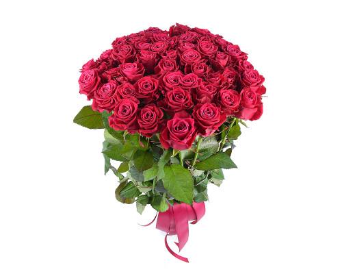 51 rose shangri-la 60 cm