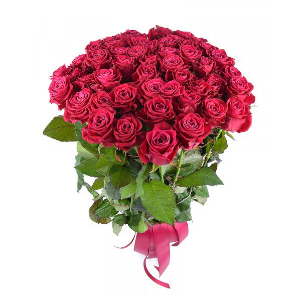 51 роза шангри-ла 60 см