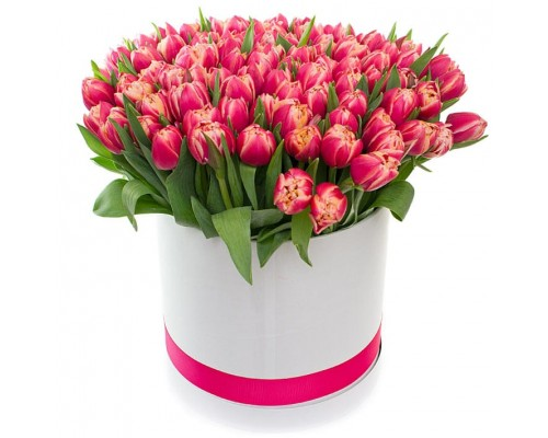 75 tulips in a box