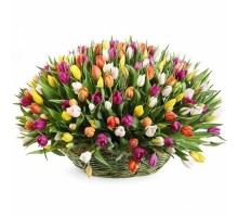 Basket of 175 tulips