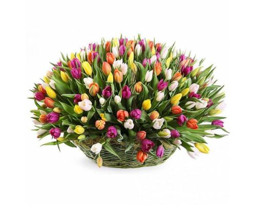 Basket of 175 tulips